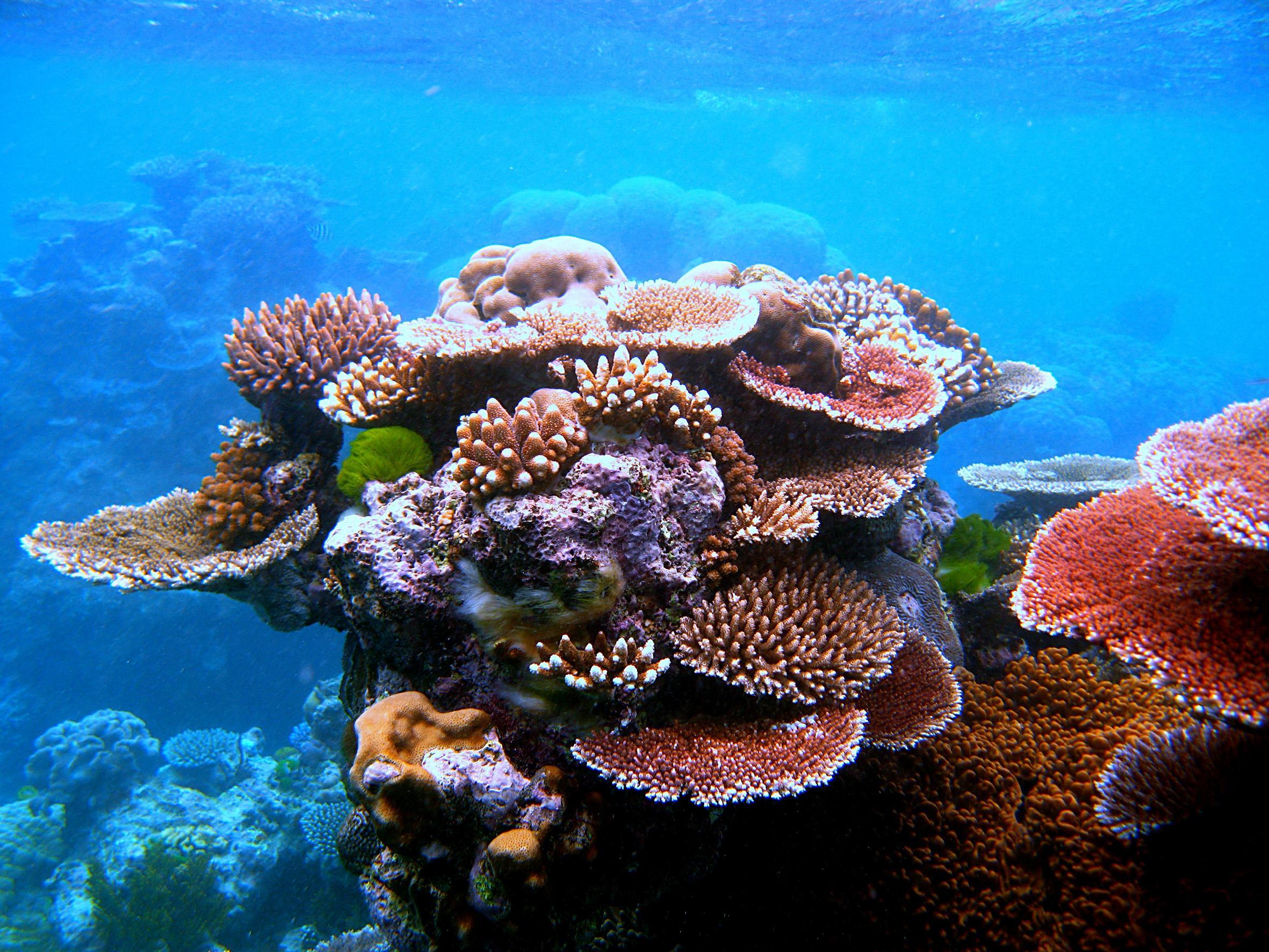 Descubren mil 100 hectáreas de arrecifes en mar veracruzano