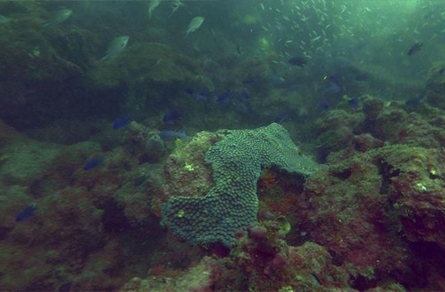 Hallán plásticos de EU y Europa entre arrecifes veracruzanos