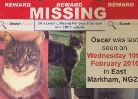Buscan asesino serial de gatos en Reino Unido