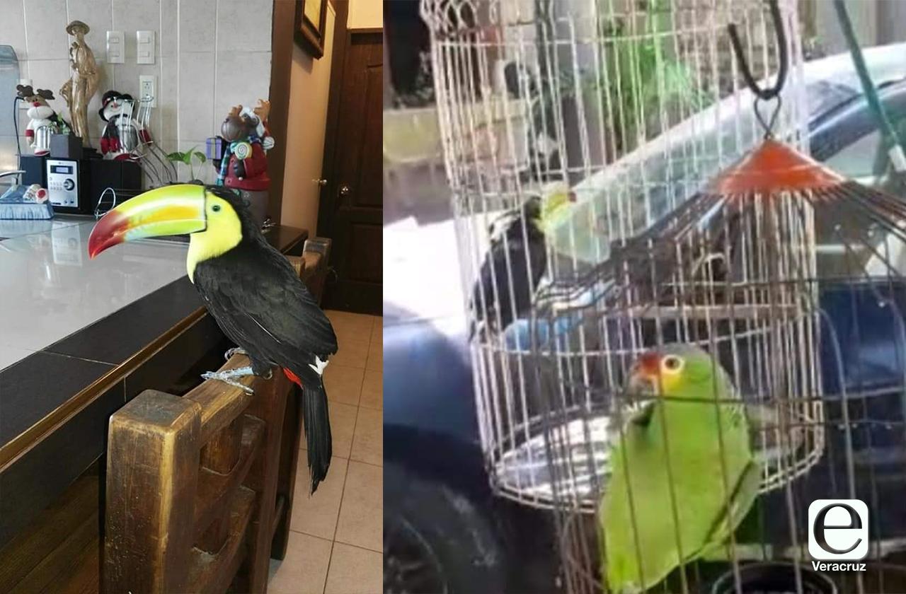 Detienen a roba aves en Coatzacoalcos