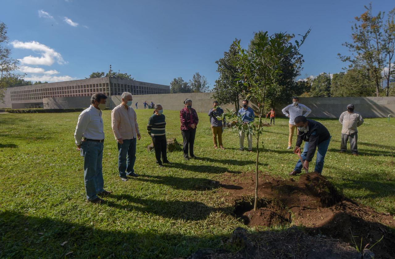 Ayuntamiento y UV promueven reforestación en la capital