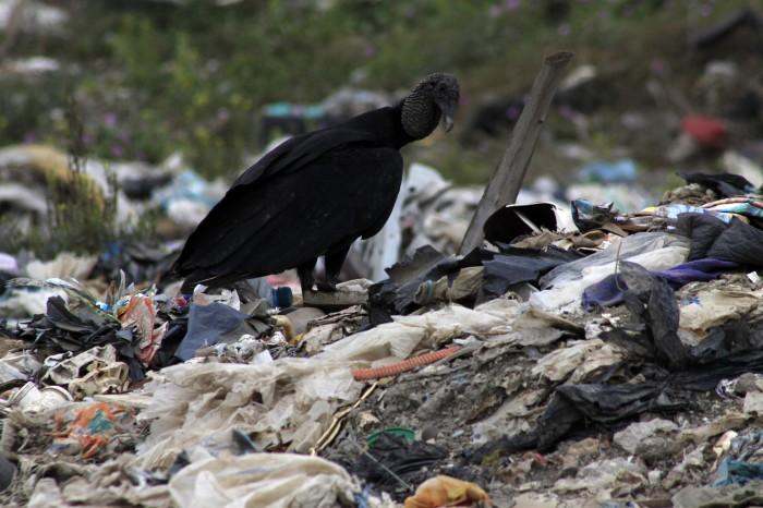 Encuentran cadáver de una mujer en basurero de Veracruz