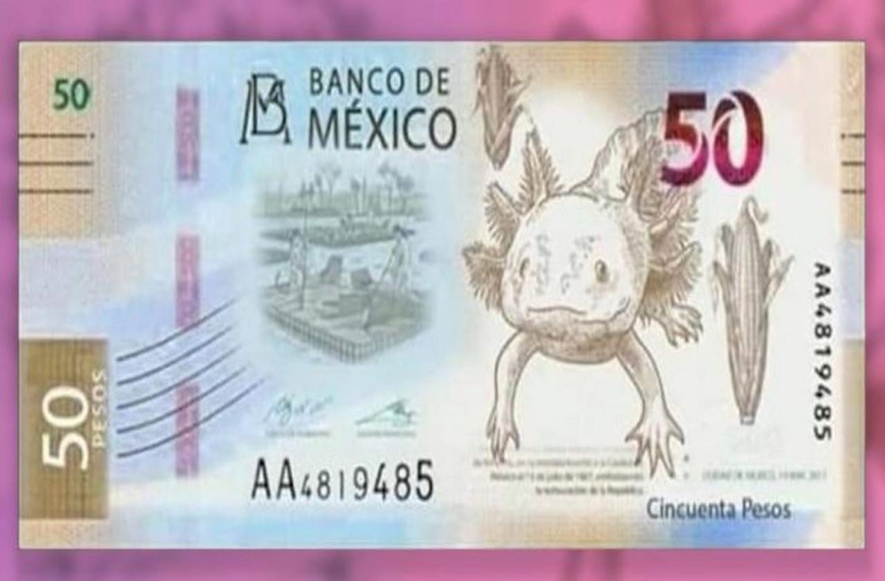 ¿Por qué el ajolote es la nueva imagen del billete de 50?