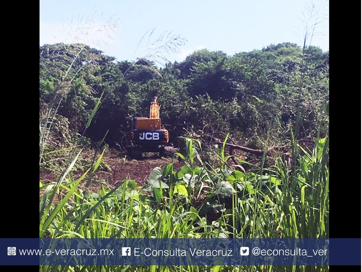 En Boca del Río constructora tala árboles de más de 60 años de edad