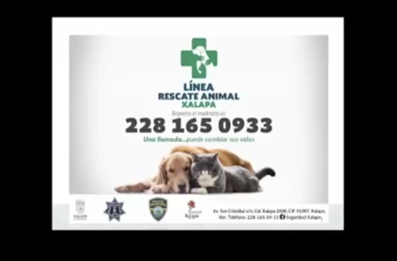 Habrá Brigada de Vigilancia Animal en Xalapa