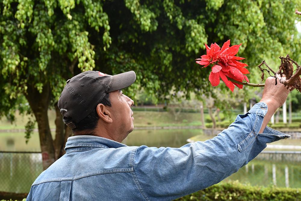 Conoce a Don Jorge, el jardinero del cuarto Lago en Xalapa