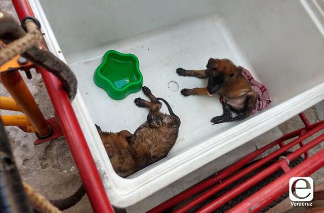 Cachorros para venta ilegal son rescatados en el Puerto