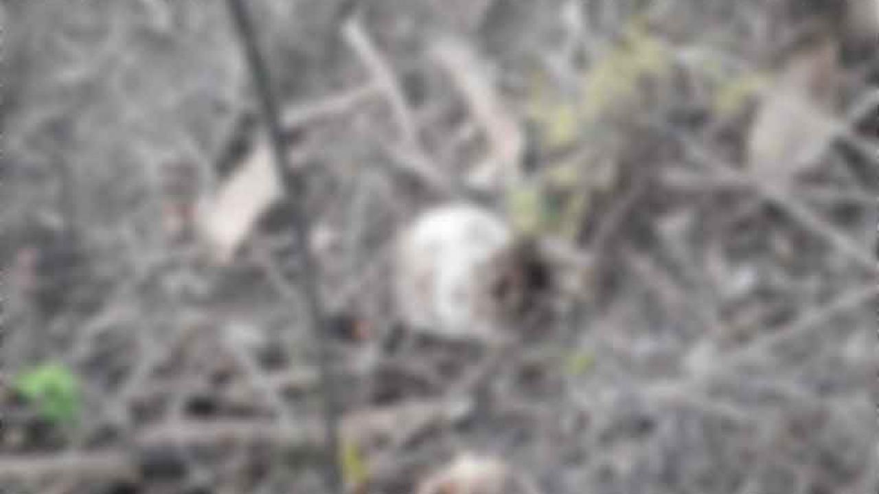 Alerta presunto hallazgo de restos humanos en colonia de Xalapa