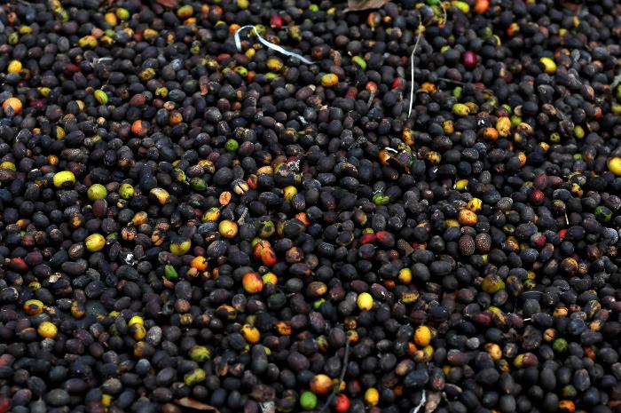 Baja producción dispara el precio del café a 9.50 pesos