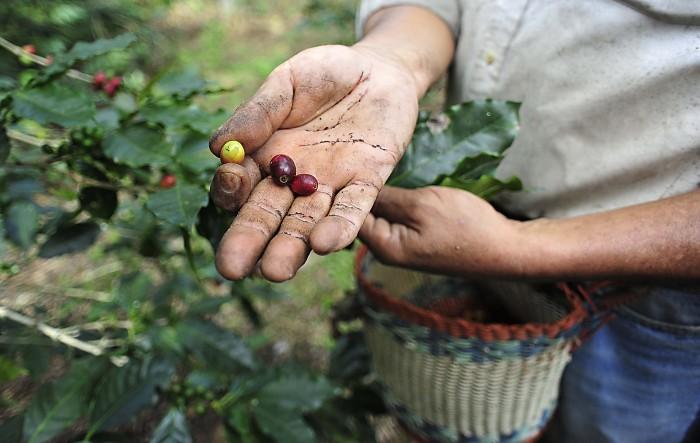 Crisis social en el campo por caída histórica en producción de café