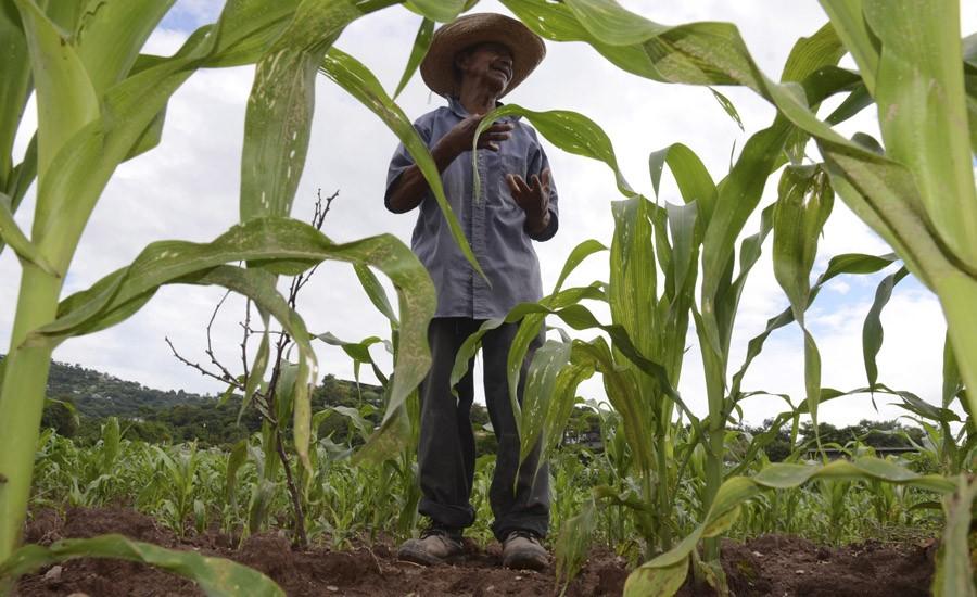 Narcos despojan de sus tierras a campesinos