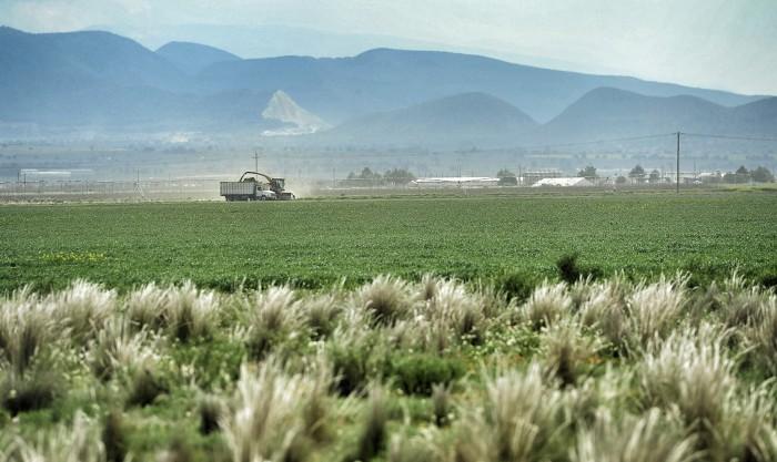 El 60% de las ganancias de cultivos se quedan en los intermediarios