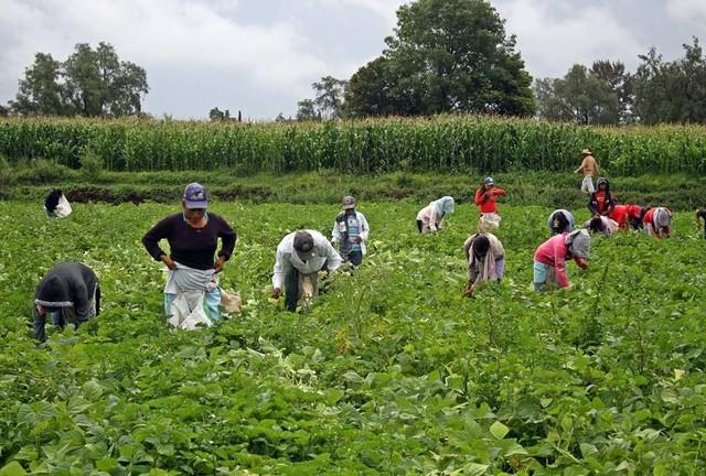 Se redujo 10% el empleo en el sector primario mexicano, advierte Cepal