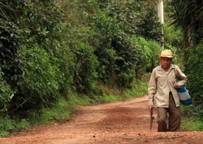 Gobierno de Veracruz deja perder 1 mil 400 mdp en el campo