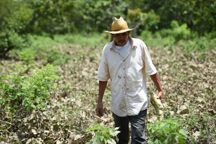 Sedarpa: en peligro 600 mdp para el sector campesino