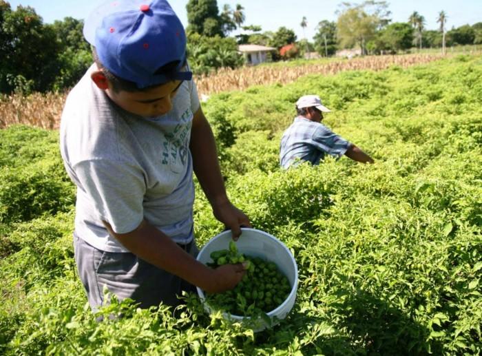 En Veracruz, 90 mil campesinos explotados laboralmente