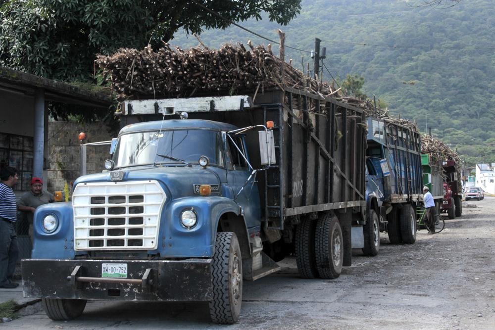 Productores abandonan cultivo de caña por aranceles de exportación