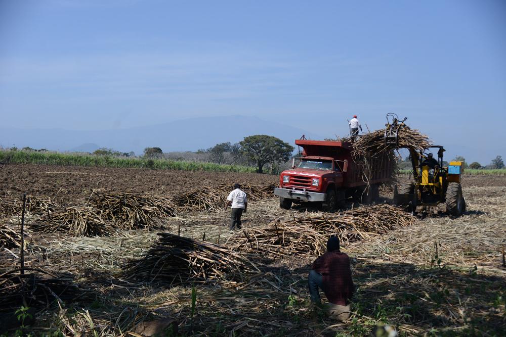 """Industria azucarera """"dividida"""": Perdomo"""