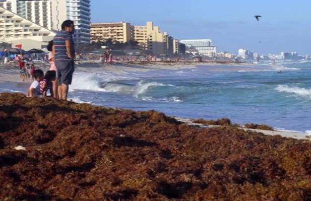 Nuevamente playas del caribe mexicano llenas de sargazo