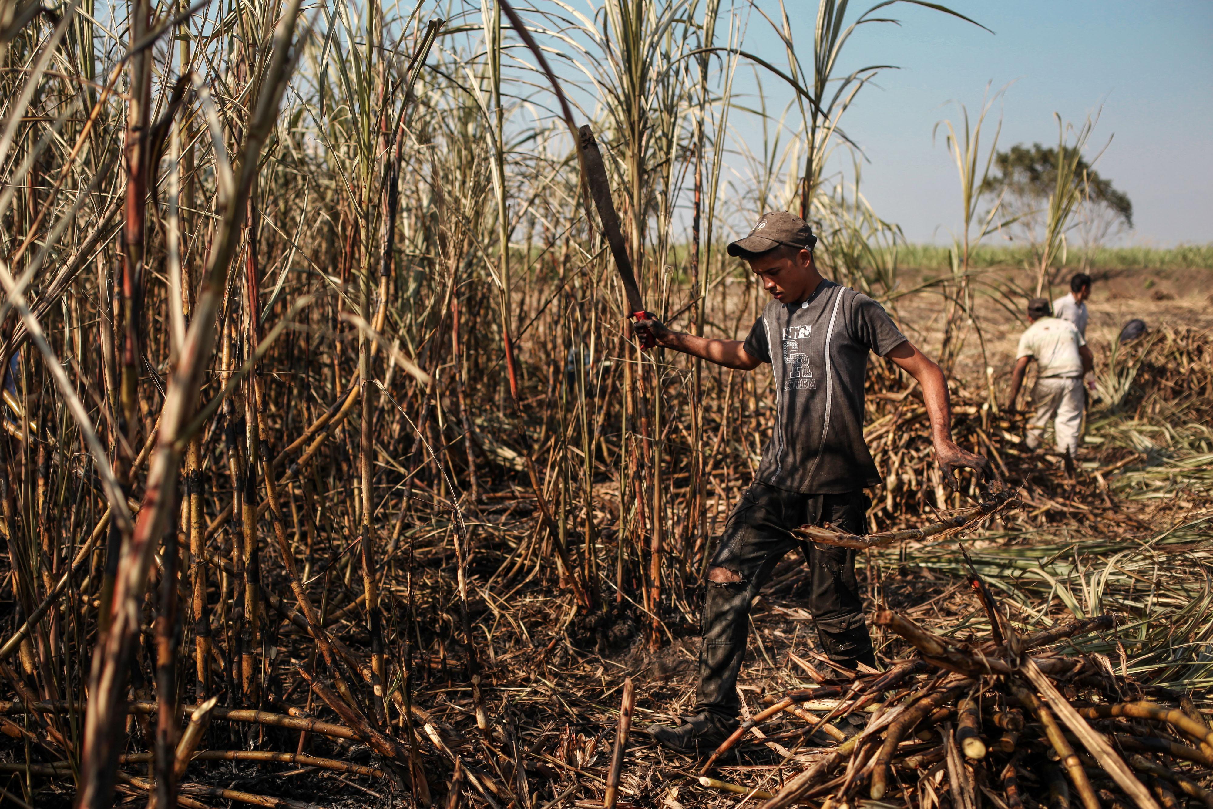 Se desploma precio del azúcar; piden fondo de emergencia