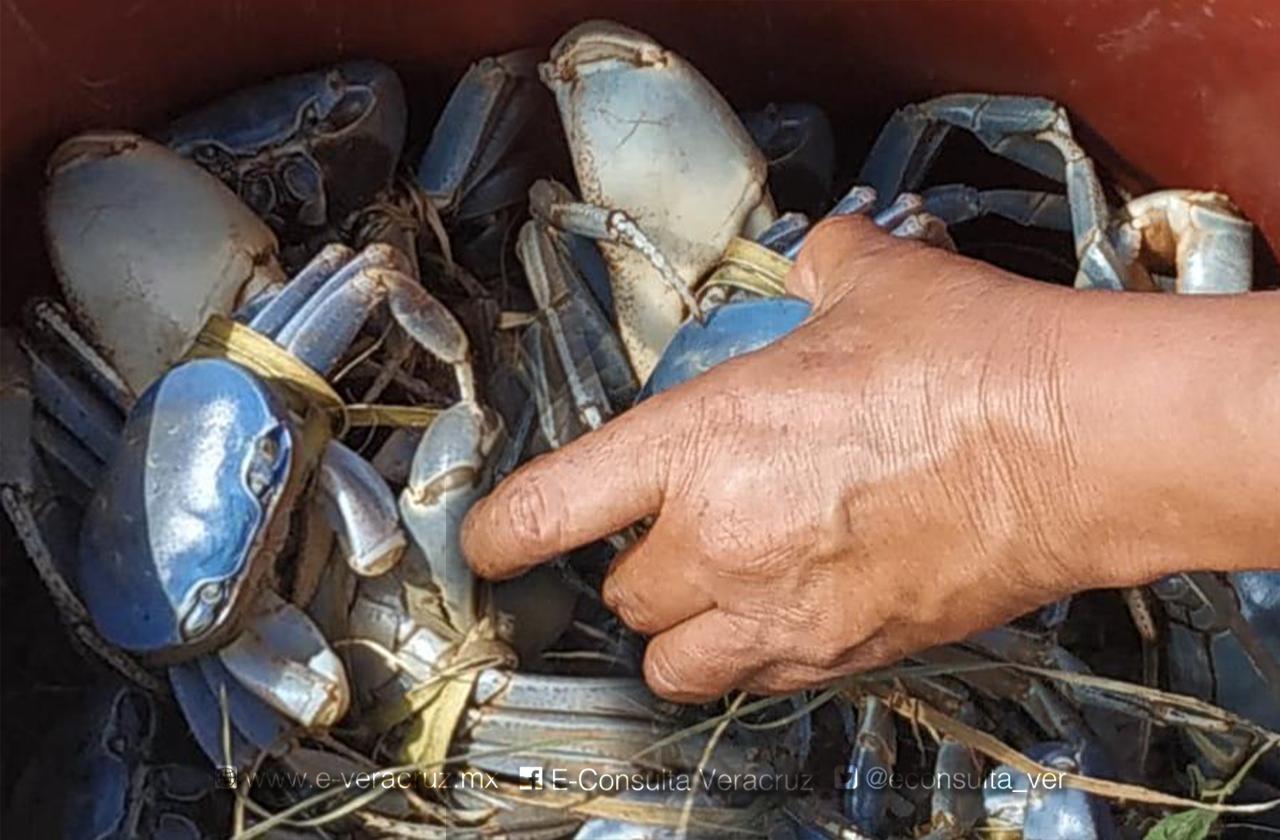 Caza y sobreexplotación amenazan al cangrejo azul