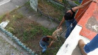 Canibalismo entre perros que fueron abandonados por su dueño
