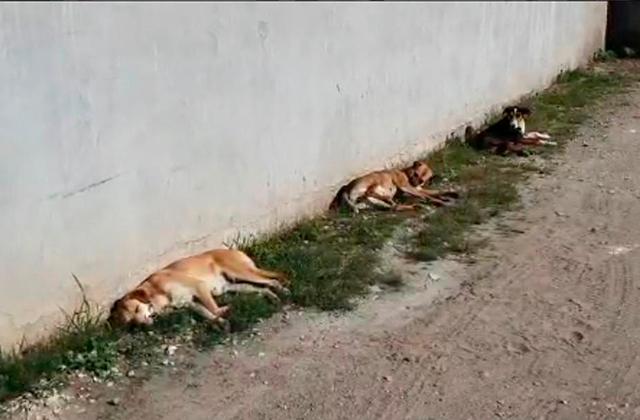 Central de Abasto de Xalapa, refugio de más de 100 perros