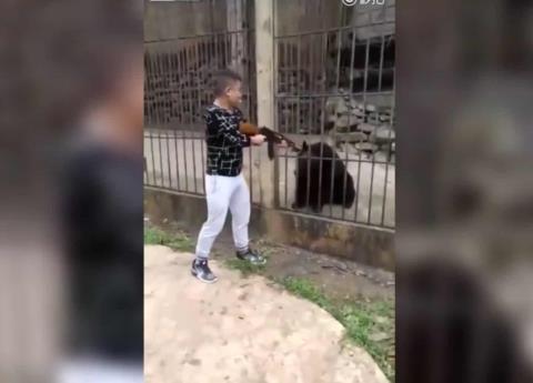 Indignación por ejecución de oso con AK-47 en zoológico