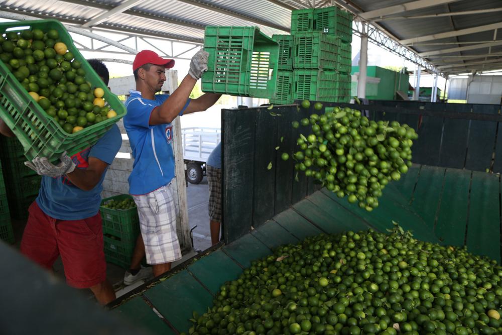 Mercado citrícola de Martínez, acaparado por Oaxaca y Tabasco