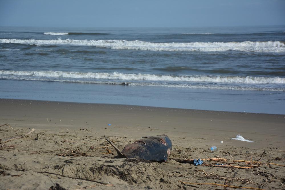 Se desconoce grado de contaminación de las playas de Coatzacoalcos