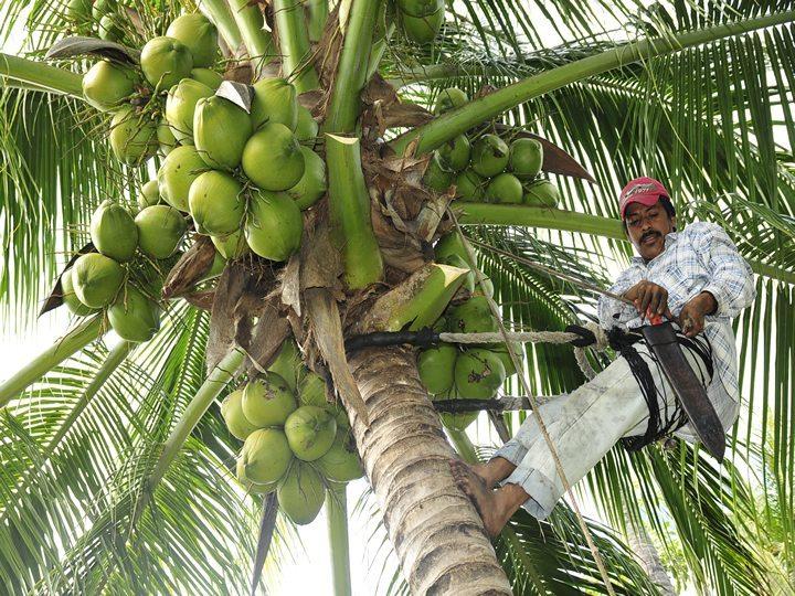 Javier Duarte quedó a deber hasta los cocos en Veracruz