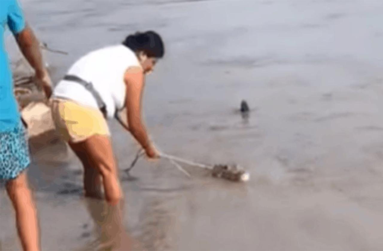 VIDEO| Mujer salva cocodrilo que arrastraba el río en Tecolutla