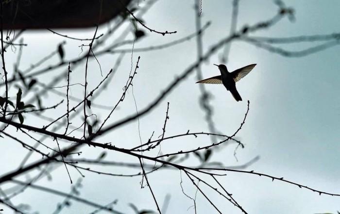 En peligro de extinción 122 especies de aves en la zona centro