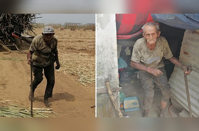 Con 94 años trabaja hasta 12 horas en un cañaveral