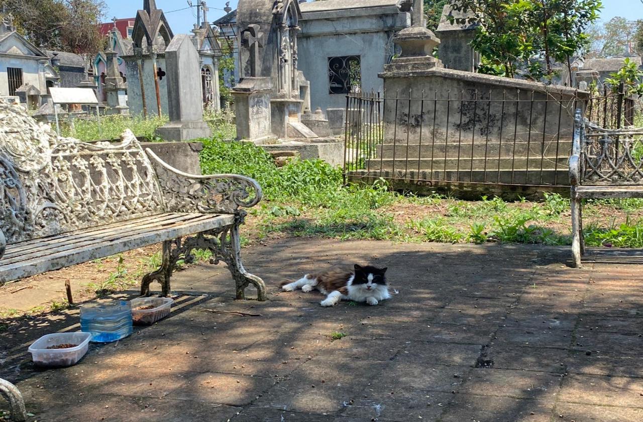 Con tejado, buscan apoyar a gatos del Panteón 5 de Febrero