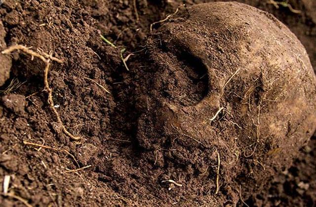 Covid, pretexto para no identificar restos en La Guapota: colectivos