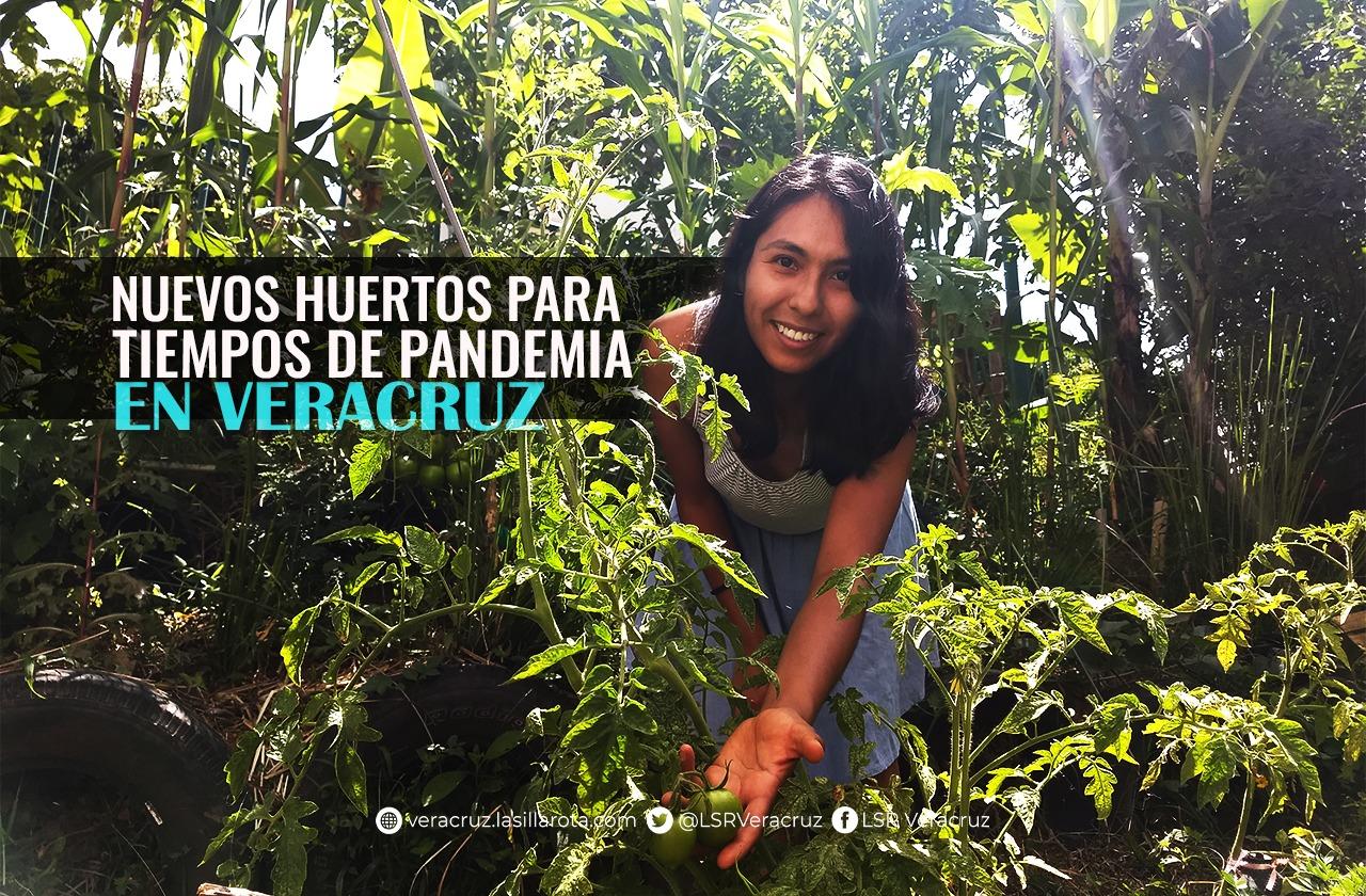 """Cultivan en espacios """"ociosos"""" de Xalapa como respuesta al covid-19"""