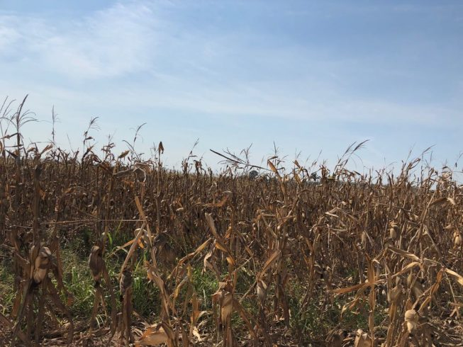 11 municipios veracruzanos en sequía extrema: CONAGUA