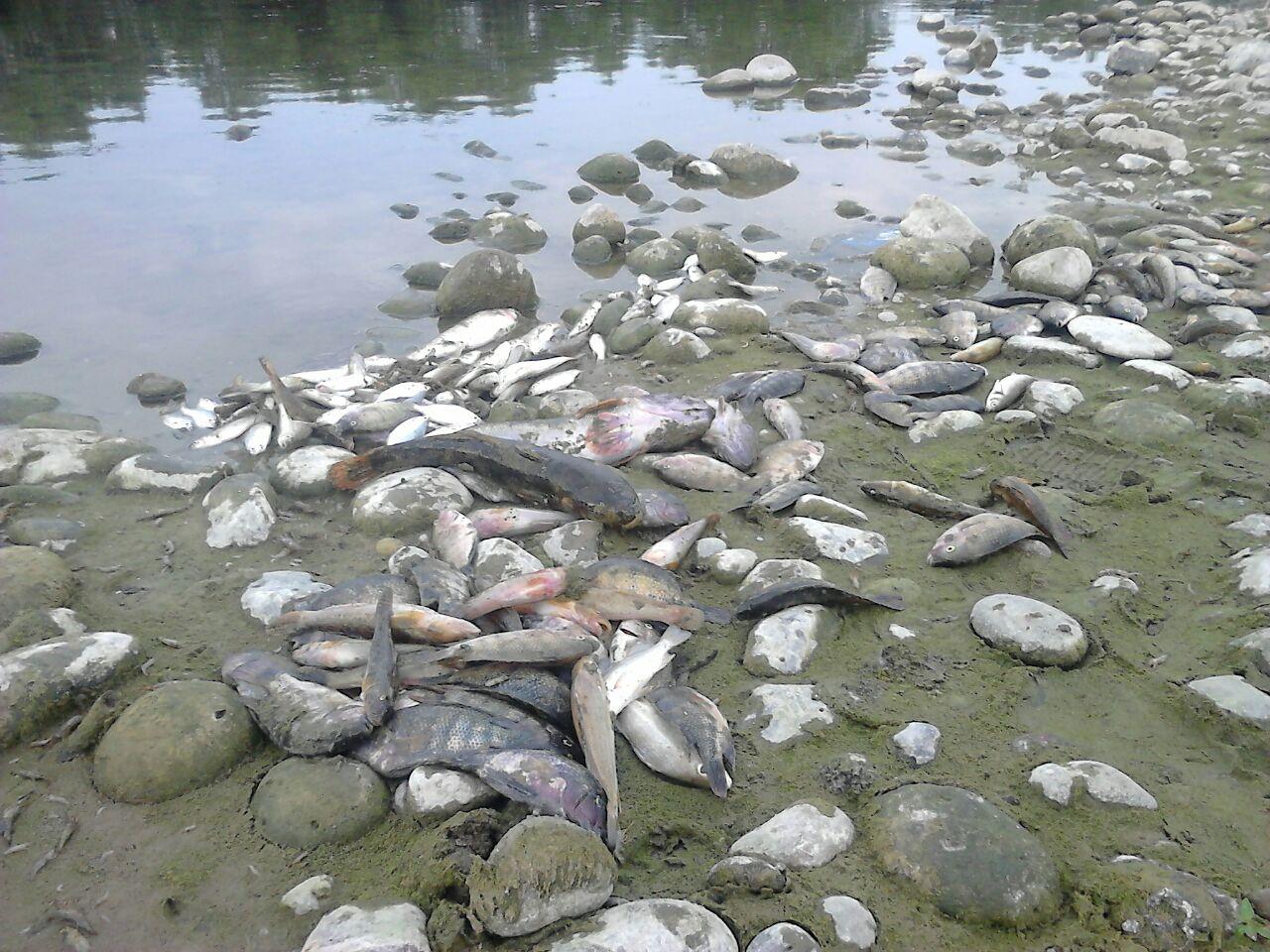 Por tercera ocasión pescadores reportan mortandad en río Bobos