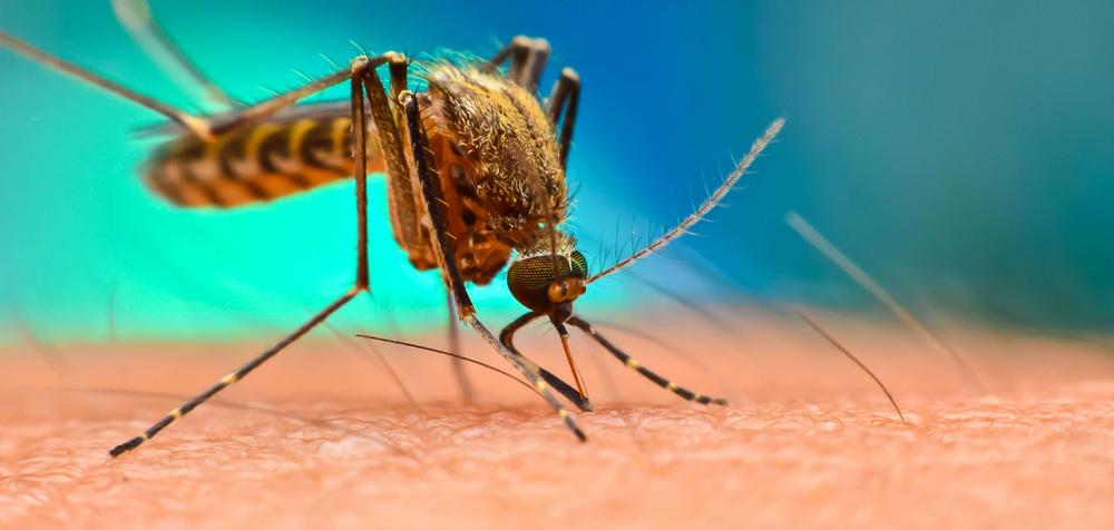 Rafael Delgado a la cabeza de municipios con más dengue