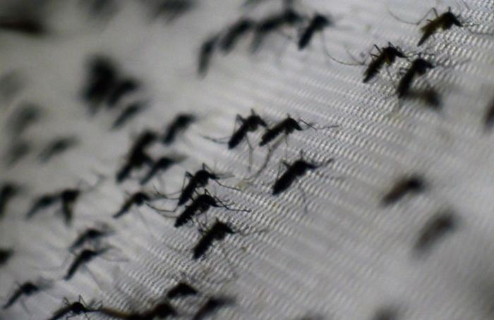 Prohíben a funcionarios de Salud declarar sobre el dengue