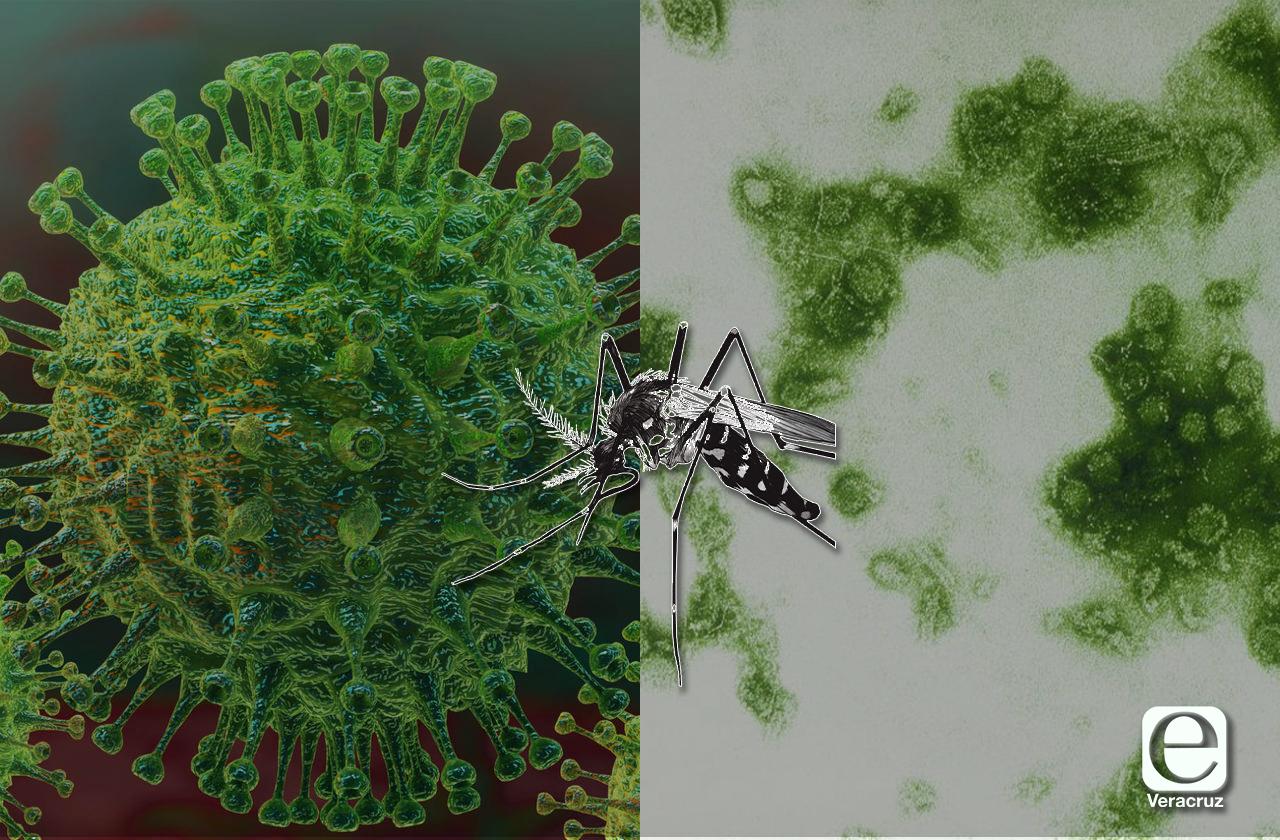 Dengue: la epidemia a la sombra del covid-19 que sigue causando muertes en Veracruz