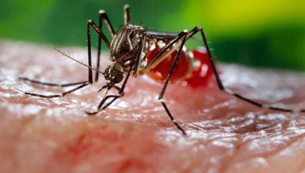 Destaca Veracruz a nivel nacional, en casos de dengue