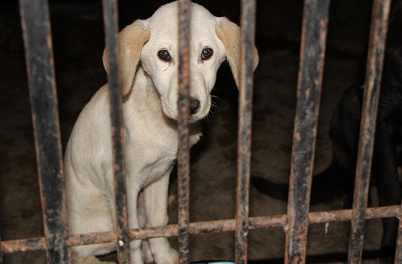 Solicitan apoyo para perros maltratados en vivienda de Xalapa