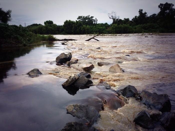 Veracruz, primer lugar en daños ambientales: Selva del Toztlan