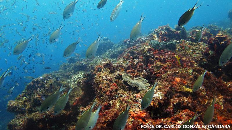 Veracruz sumaría un área natural protegida en Los Tuxtla