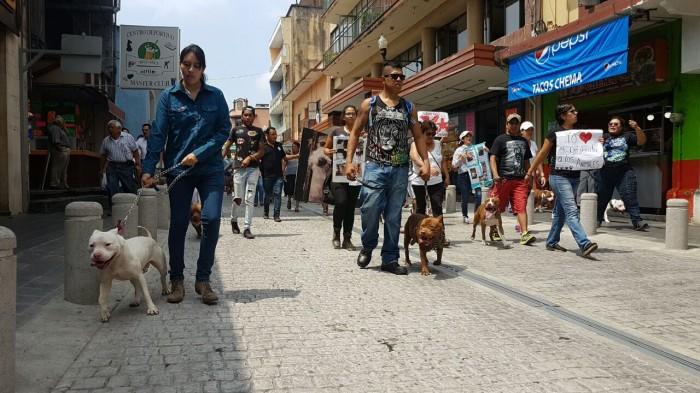 """""""Hoy son los perros, mañana son sus hijos"""", reclaman animalistas"""