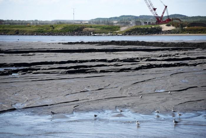 Dragado para construcción de escollera provoca daños al arrecife