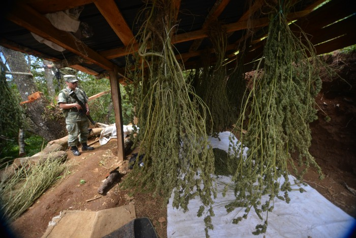 Saturan cárceles con reos por droga; la ONU urge a debatir la despenalización