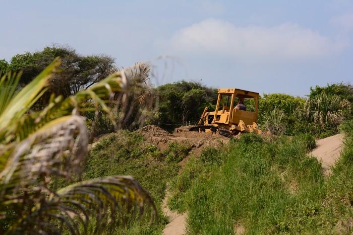 Ambientalistas rescatan flora y fauna de las dunas de Coatzacoalcos